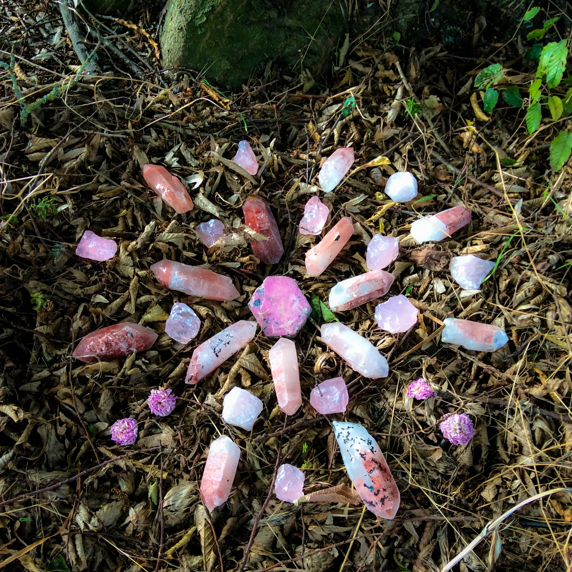 Ruby, Hematoid Quartz, Rose Quartz and Roses at the feet of the Fagus Sylvaticus in our garden