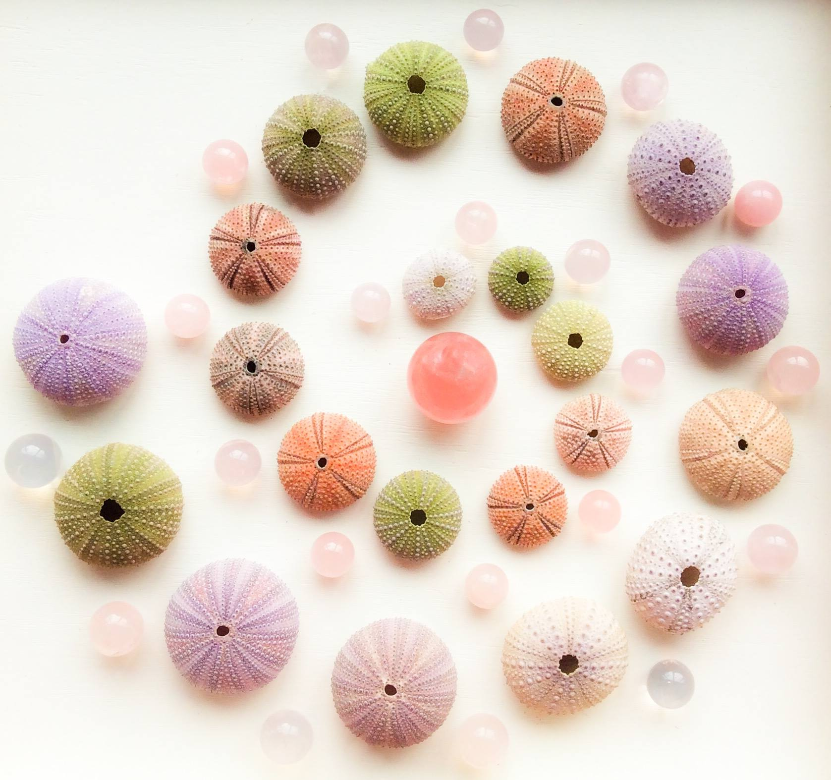 Rose Quartz, Pink Girasol and Sea Urchins