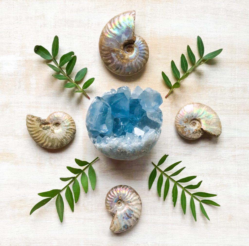 Celestine, Ammonite and Leaves