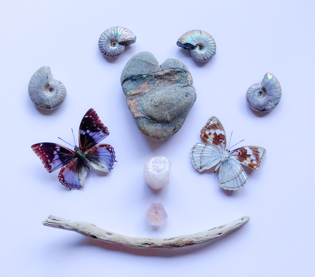 A gifted heart shaped Stone with a Quartz and a Hematite vein, Morganite, iridescent Ammonite, gifted driftwood, Mimathyma schrenki, Charaxes smaragdalis